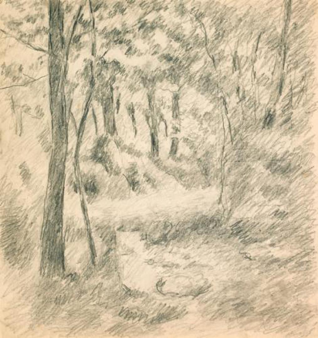 Sentiero nella boscaglia