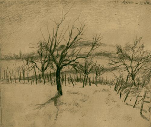 Alberi d' inverno