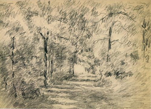Strada nel bosco (Rosero)